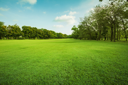 Foto de landscape of grass field and green environment public park use as natural background,backdrop - Imagen libre de derechos