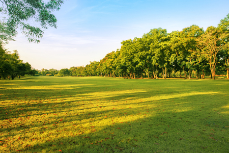 Photo pour landscape of grass field and green environment public park use as natural background,backdrop - image libre de droit