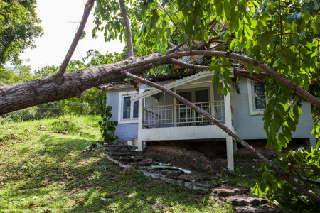 Foto de falling tree after hard storm on damage house - Imagen libre de derechos