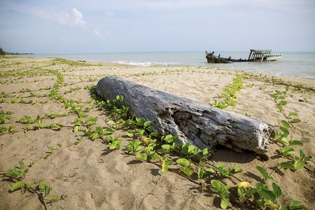 Foto de old tree stump and wreck boat on sea beach - Imagen libre de derechos