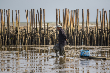 Photo for samuthsakorn thailand - march8,2017 : domestic life of fishery villager seeking for oyster in mud flat of local coastal of samuthsakorn province outskirt bangkok thailand capital city - Royalty Free Image
