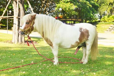 Photo pour cute pony on green grass - image libre de droit