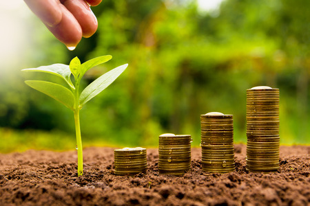 Photo for Female hand watering young plant with stack coin for growing business - Royalty Free Image