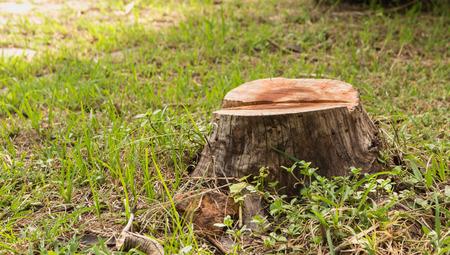 Foto de Stump on green grass in the garden. Old tree stump in the summer park. - Imagen libre de derechos