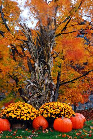 Photo pour Autumn Decor - image libre de droit