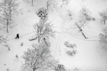 Photo for Aerial top view on a winter park with trees and footpath covered with snow. Lonely man walking through - Royalty Free Image