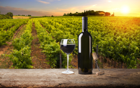 Photo pour Extra wide panoramic shot of a summer vineyard shot at sunset - image libre de droit