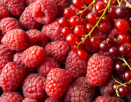 Photo for Background of raspberries and red currants. Fresh berries closeup. Top view. Background of red berries. Various fresh summer fruits. Red raspberries. - Royalty Free Image