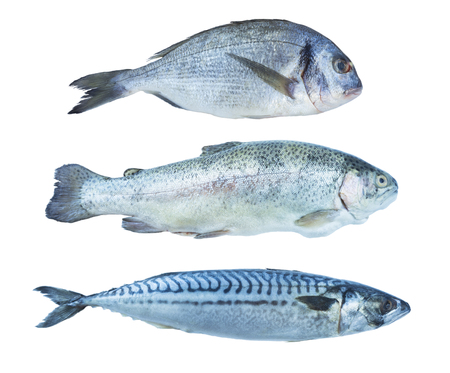 Photo for Fish rainbow trout, dorado, mackerel, isolated on a white background. Set of marine fish. Marine fish over white background. Fishes with copy space for text. - Royalty Free Image