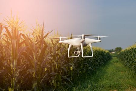 Foto de Drone of corn field - Imagen libre de derechos