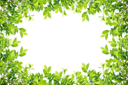 Photo for leaves frame isolated on white background - Royalty Free Image