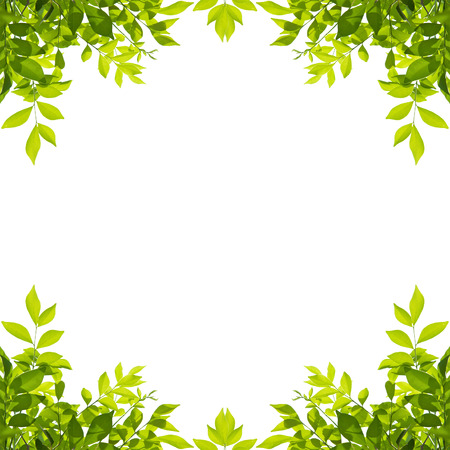 Foto de Green leaf border isolated on white background. Clipping paths included. - Imagen libre de derechos
