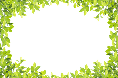 Photo for Green leaf border isolated on white background. Clipping paths included. - Royalty Free Image