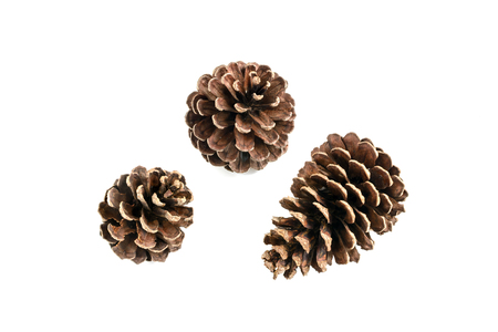Foto de set of various pine cone trees isolated on white background - Imagen libre de derechos