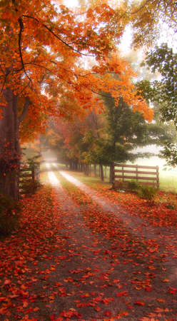 Colorful autumn path with fences