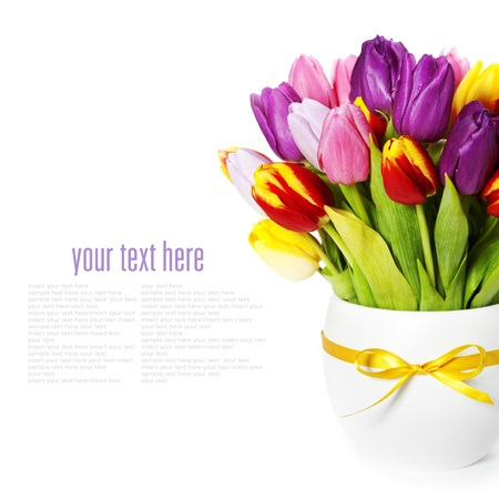 Photo for fresh spring tulips on white background (with sample text) - Royalty Free Image