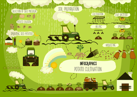 Illustration for Potato cultivation, infographics. Vector. - Royalty Free Image
