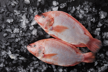 Foto de Two raw red tilapia fish on ice - Imagen libre de derechos