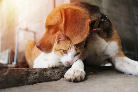 Foto de Beagle dog and brown cat in warm hug on the footpath. - Imagen libre de derechos