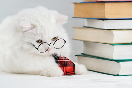 Foto de Portrait of furry cat in transparent round glasses. Domestic soigne scientist kitty in red tie poses on books background in library. Education, science, knowledge concept. Studio photo. - Imagen libre de derechos