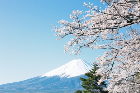 Photo for Mt  Fuji with cherry blossom - Royalty Free Image