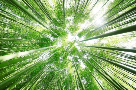 Photo pour Bamboo Grove - image libre de droit