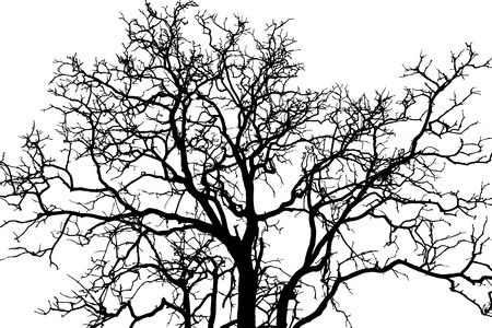 Illustration pour tree branch black shadow - image libre de droit