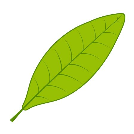 Ilustración de Tea green leaf vector tea tree leaf on white background - Imagen libre de derechos
