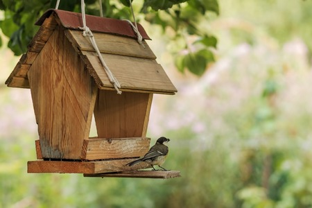 Photo pour Bird feeding at backyard feeder - image libre de droit