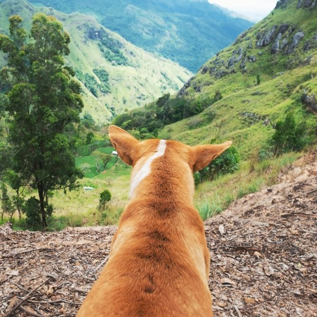 Photo for Dog looking at view from Ella rock in Sri Lanka - Royalty Free Image