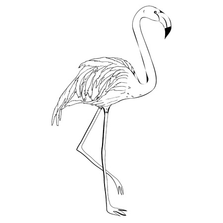Illustration pour Flamingo hand draw - image libre de droit