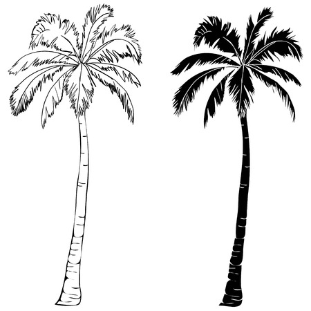 Illustration for Palm tree icon - Royalty Free Image