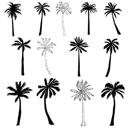Illustration for Vector palm tree silhouette icons on white background. - Royalty Free Image