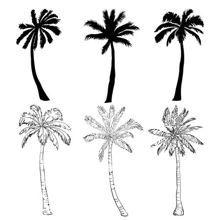 Illustration pour Vector palm tree silhouette icons on white background, branch, climate, environment, exotic, flora, floral, hawaii, icon, illustration island leaf nature outdoor paradise plant - image libre de droit