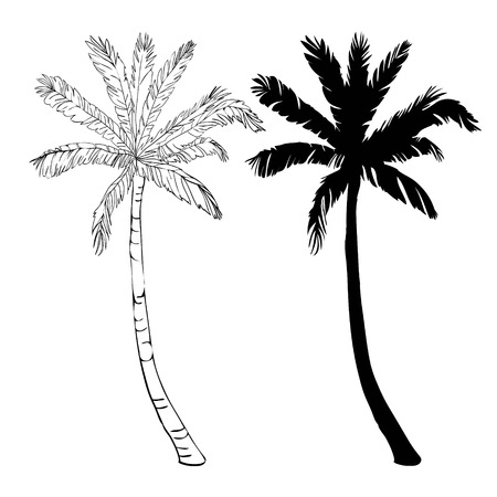 Illustration for Vector palm tree silhouette icons on white background, branch, climate, environment, exotic, flora, floral, hawaii, icon, illustration island leaf nature outdoor paradise plant - Royalty Free Image