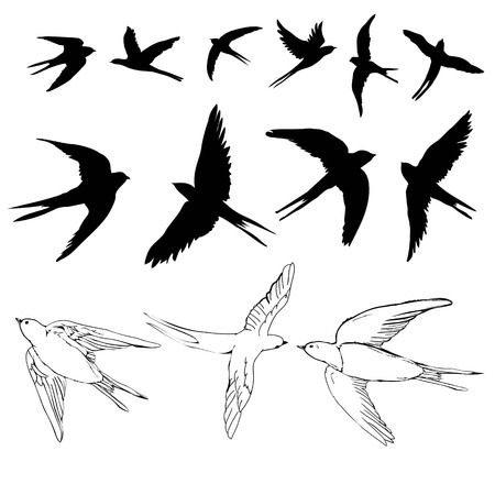 Ilustración de swallow sketch and silhouette, set, vector illustration - Imagen libre de derechos
