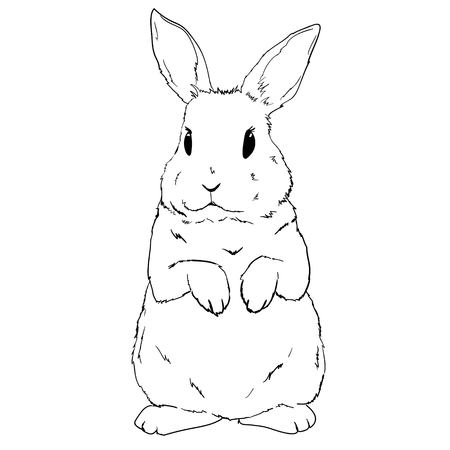 Illustration pour Rabbit sketch and silhouette, vector, illustration bunny black - image libre de droit