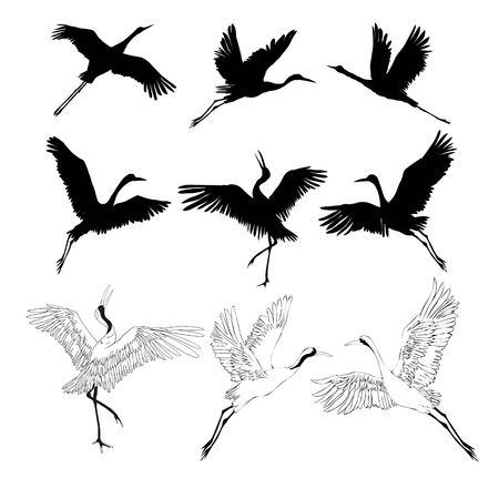 Ilustración de crane sketch, bird flying over white background, set, silhouette, vector illustration - Imagen libre de derechos