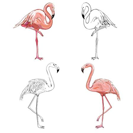 Illustration pour Hand drawing flamingos. Vector illustration, animal, bird isolated drawing pink - image libre de droit