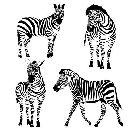 Illustration pour Logo with the head of a zebra. - image libre de droit