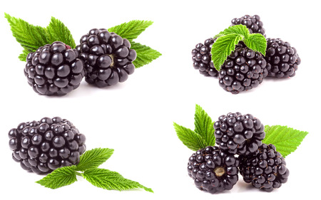 Photo for blackberry with leaves isolated on white background. Set or collection - Royalty Free Image