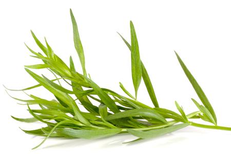 Photo pour tarragon isolated on a white background. Artemisia dracunculus - image libre de droit