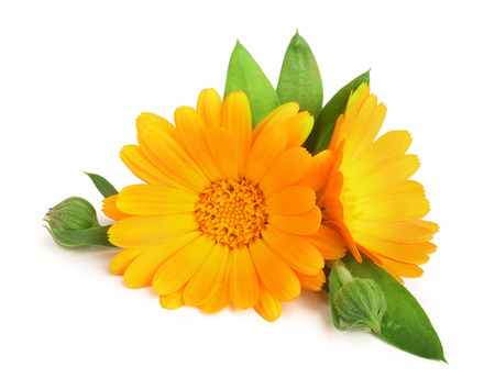 Photo pour Calendula. Marigold flower with leaf isolated on white background - image libre de droit