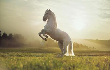 Photo pour Majestic photo of strong royal white horse - image libre de droit