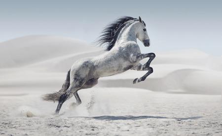 Photo pour Picture presenting the galloping white pony - image libre de droit