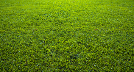 Foto de Background of a beautiful green grass pattern - Imagen libre de derechos