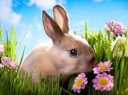 Photo for easter Baby rabbit on green grass with spring flowers - Royalty Free Image