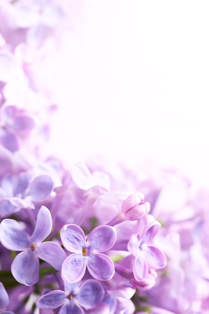 Photo for Spring flowers abstract background - Royalty Free Image