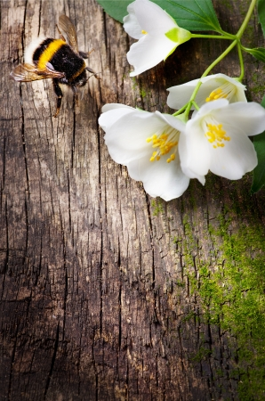 bee and flower jasmine