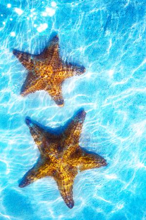 Art real live sea star on a white sand
